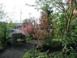 pacific northwest gardening may vegetable gardening in the