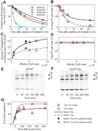 a peptide filtering relation quantifies mhc class i peptide