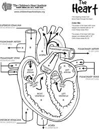 Virtual Frog Dissection Worksheet Frog Anatomy Heart