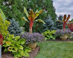 Landscaping Ideas For Large Backyards Large Container Planting Ideas Houzz