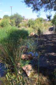 urban waterways management and living streams