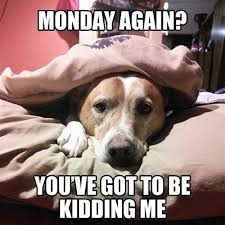 Cat And Dog Memes - 11 marvelous meme monday dog memes petcentric by purina