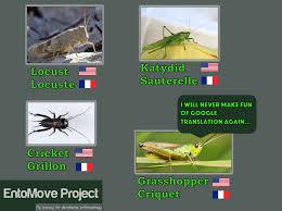 Crickets Meme - the bug investigation locust grasshopper cricket or katydid