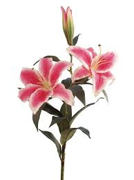 Pink Lily Flower Cliparts Stargazer Lilly Free Download Clip Art Free Clip Art