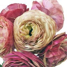 Ranunculus Flower Designer Japanese Ranunculus Flower
