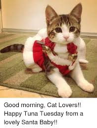 Good Morning Cat Meme - good morning cat lovers happy tuna tuesday from a lovely santa