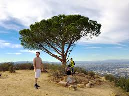 the eight most essential trees in los angeles l a weekly