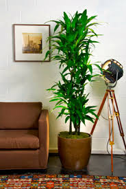 indoor plans top 10 best indoor plants houston interior plants