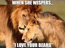 Memes Love - top 60 best funny beard memes bearded humor and quotes