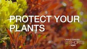amazon lawn u0026 garden shorts what u0027s attacking your plants and how