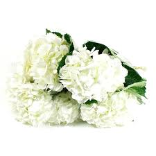 Bulk Hydrangeas 202 Best Baby U0027s Breath Wedding Images On Pinterest Baby U0027s Breath
