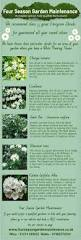 181 best evergreen foliage images on pinterest garden plants
