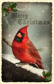 cardinal pinteres