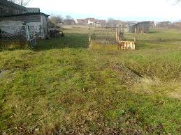 no till seeding without removing grass permaculture forum at
