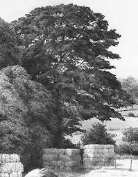 how to draw realistic trees and foliage i m drawing a blank