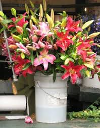 Wholesale Fresh Flowers Bulk Flowers Wholesale Flowers Mn Buy Bulk Flowers Minneapolis