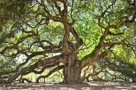 oak meaning about oak