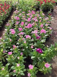 al bahia plant nursery realhousewivesofad com