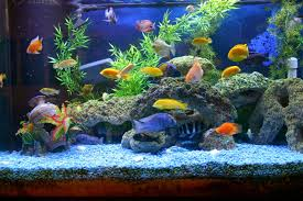 Beautiful Home Fish Tanks by Myths About Keeping An Aquarium At Home