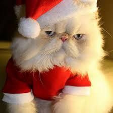grumpy cat decorations décor zazzle