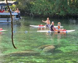 Crystal River Florida Map Crystal River Manatees See Manatees Even Swim With Them
