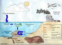 cycle shell environmental benefits florida shellfish aquaculture online