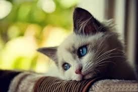Sad Kitty Meme - create meme sad kitty pictures meme arsenal com