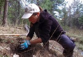 recon native plants project needs u2013 boulder bear coalition