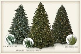 evergreen everlasting the differences between fir spruce and