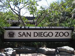 san diego native plant society the latest from balboa park and the san diego zoo