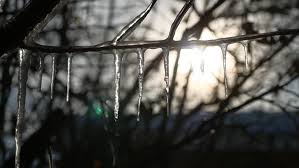 frozen icicles on the tree in december stock footage 8021515