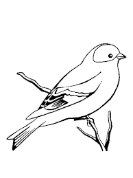 canary coloring pages download and print canary coloring pages