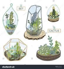 succulent cactus terrarium set stock vector 389256352 shutterstock