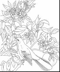 100 free flower coloring pages free flowers coloring pages