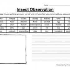 insect observation worksheet have fun teaching