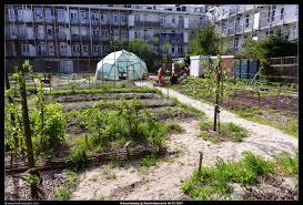 Urban Garden Amsterdam Urban Farming Amsterdam West 2013 05 10