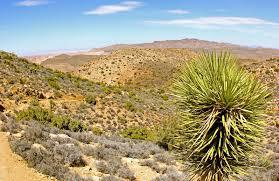 Joshua Tree Map File Yucca Pines Near Ryan Mountain Trail Joshua Tree National