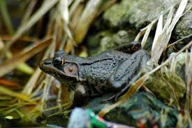how to attract ponds and toads to your pond hgtv
