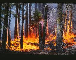 Wildfire Cartoon Dvd by Finding Forest Fires In Sierra Nevada Driven By Past Land Use