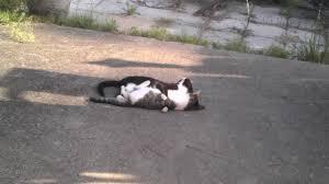 feral kittens being bros in my backyard animalsbeingbros