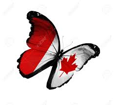 canadian flag butterfly flying isolated on white background stock