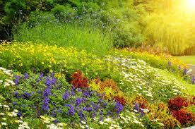 flower garden stock photos u0026 pictures royalty free flower garden