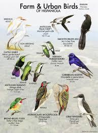 société audubon haiti haiti audubon society birds of haiti
