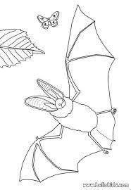 coloring page of a bat realistic bat u0026 butterfly coloring pages hellokids com