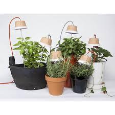 Grow Lights For Indoor Herb Garden - 196 best jardin indoor images on pinterest indoor gardening