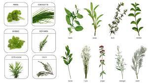herbes cuisine des plantes aromatiques dans ma cuisine