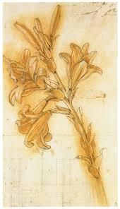 discovering da vinci sketches of various plants by leonardo da