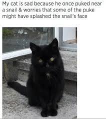Sad Cat Memes - my cat is sad because he once cat meme cat planet cat planet