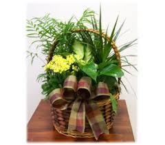 flower delivery utah 30 best live plants images on live plants shop