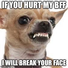 Chihuahua Meme - angry chihuahua meme generator imgflip